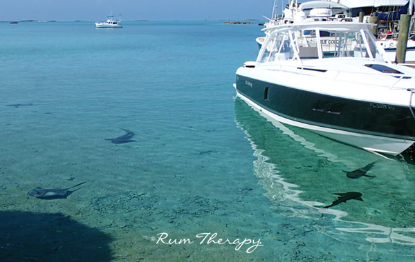 5 Days on Staniel Cay, Part 2 – The Island – Rum Therapy